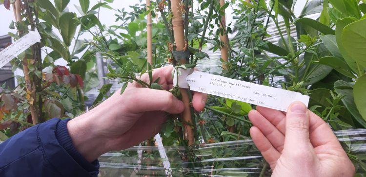 Het handelsbedrijf koopt planten in bij leveranciers, sorteert deze op klant- en projectniveau en levert ze na etikettering af bij de klant of het project.