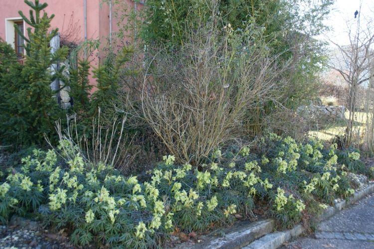Planten Voor In De Schaduw.Vaste Planten Voor De Droge Schaduw