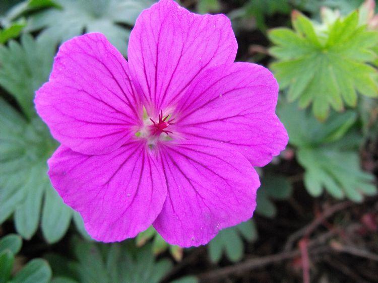 Vaste Planten Tuin : Rijke bloei met vaste planten in je tuin lifestyle wonen