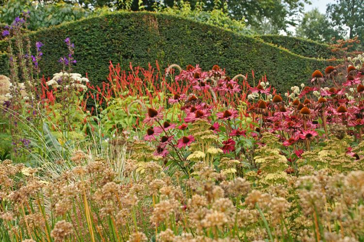 Echinacea purpurea in de tuin van Piet Oudolf