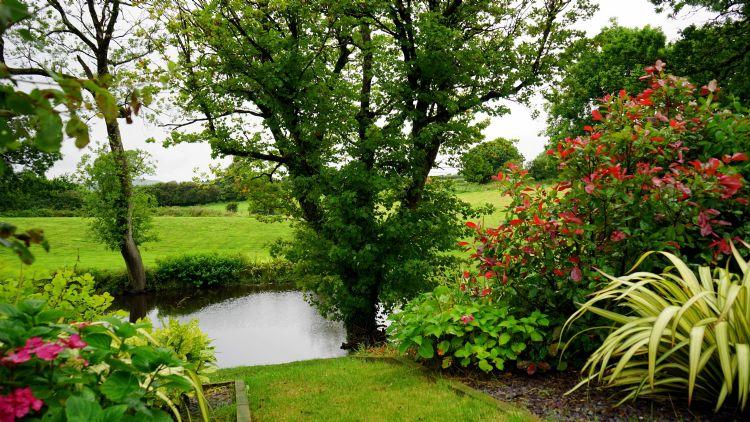 Kleine Bomen Voor In De Tuin.De Vijf Mooiste Kleine Bomen En Heesters Voor In De Tuin
