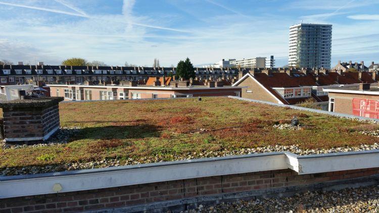 Een extensief dak in Den Haag. Van Zetten heeft de dakbedekking vervangen en een extensief groendak aangebracht. De opdrachtgever was een VvE. Men wilde voor de bovenverdieping sedum, om warmte op die verdieping tegen te gaan.