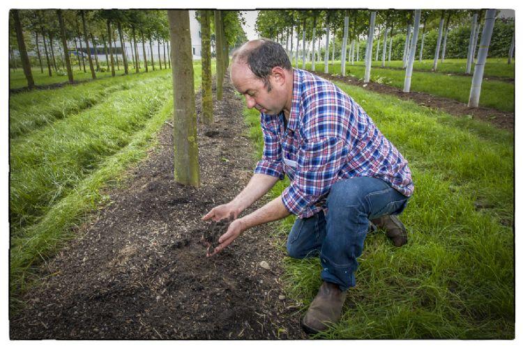 De toepassing van mulch in de boomkwekerijsector
