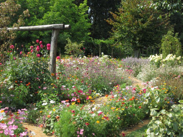 Veldbloemen zijn ook goed toe te passen in combinatie met vaste planten. Zo breng je extra kleur in de tuin, van de zomer tot diep in het najaar.