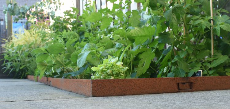 Tuin met randbegrenzing